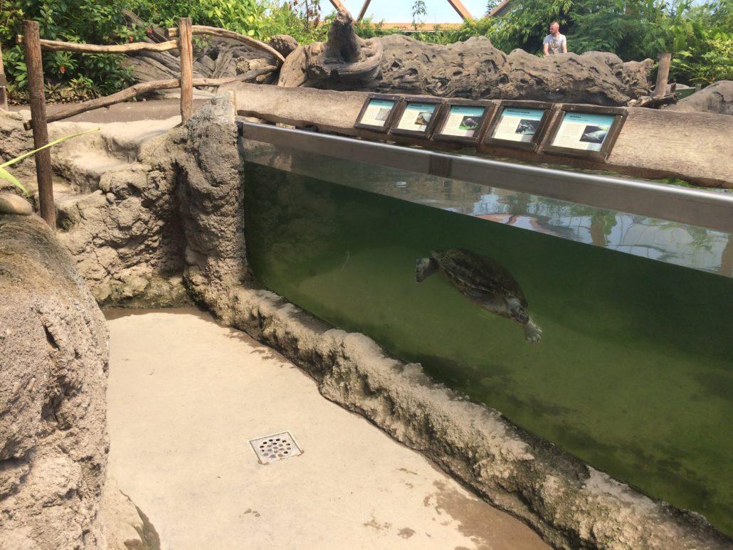 Schilpad aquarium met kunstmatige stenen