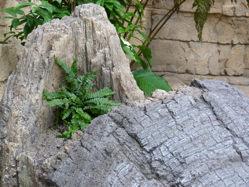 Een varen in kunstmatige rotsmuur