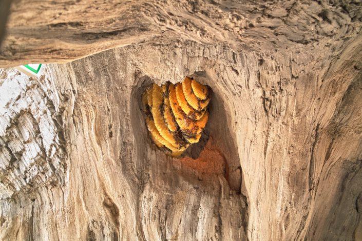 Bijenkorf als decoratie